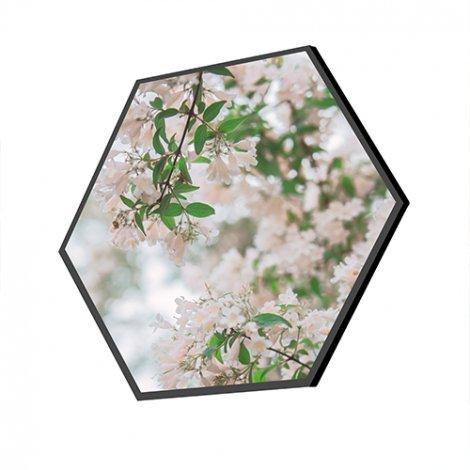 akoestische hexagons